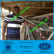 ISO9001 hot dipped zinc plating A type layer chicken cage