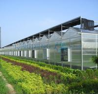 Venlo Roof Agricultural Polycarbonate Sheet Greenhouse