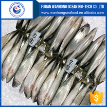 Fresh Lighting caught Sardines 8-10pcs/kg, Frozen Sardine Fish for Canned Seafood