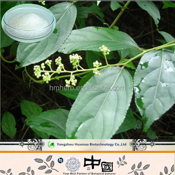 Alibaba china suppliers 2017 Tripterygium wilfordii Hook. f.