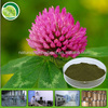 Hot-sale Chinese Red Clover Extract for antibiotic
