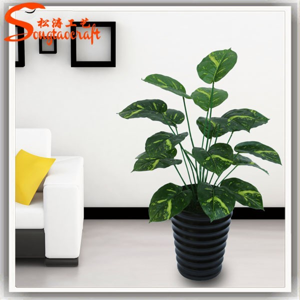 noms de plantes pots en plastique pour plantes plantes ornementales aquarium plantes jardin des. Black Bedroom Furniture Sets. Home Design Ideas