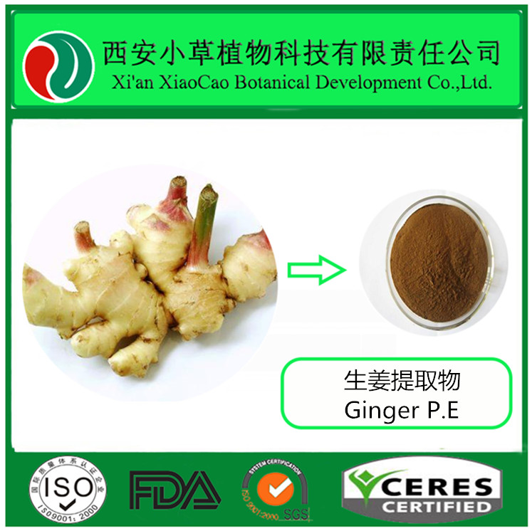 100% Natural Ginger Dry Extract