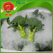 No-polluting broccoli exporter with super quality