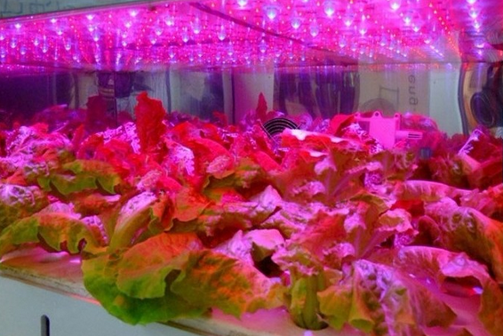 indoor greenhouse flower vegetable 9W 12W 15W led grow light e27