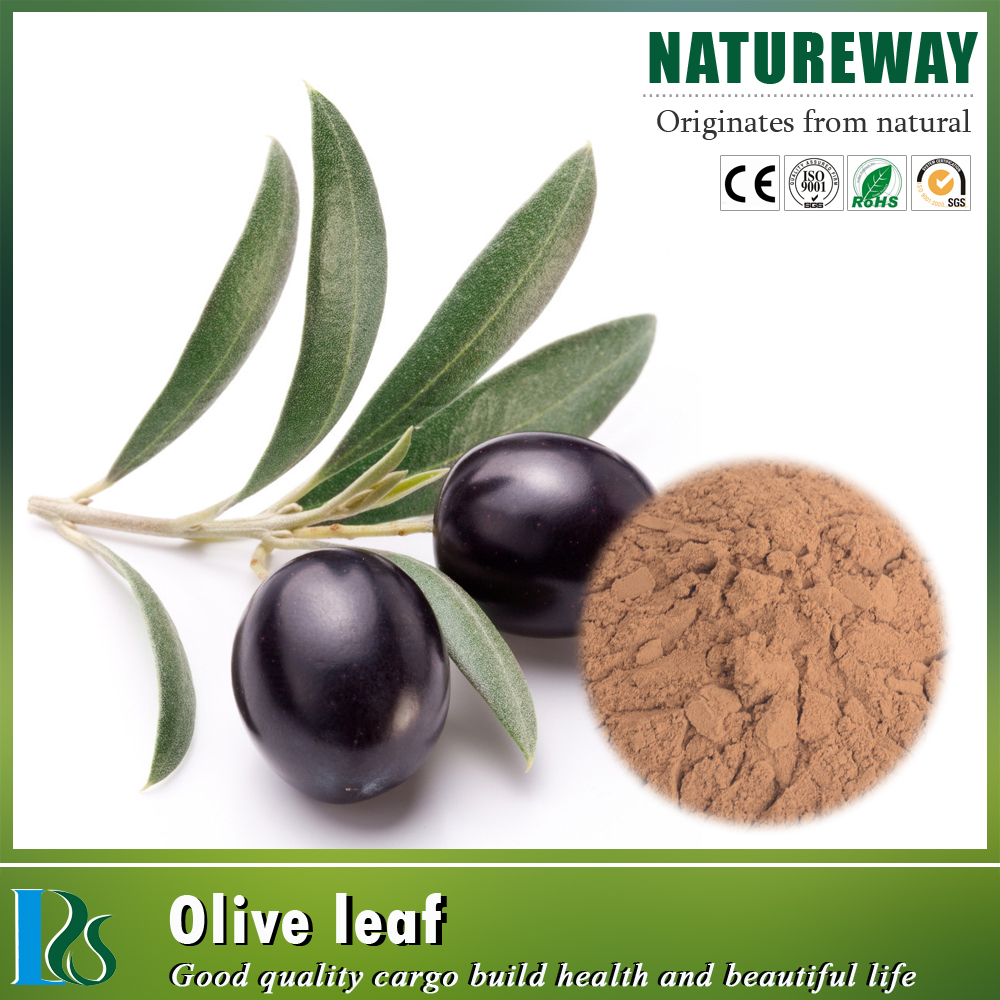 High quality Olive Powder Extract Ratio 4:1 5:1 10:1 20:1 Olive Leaf Powder