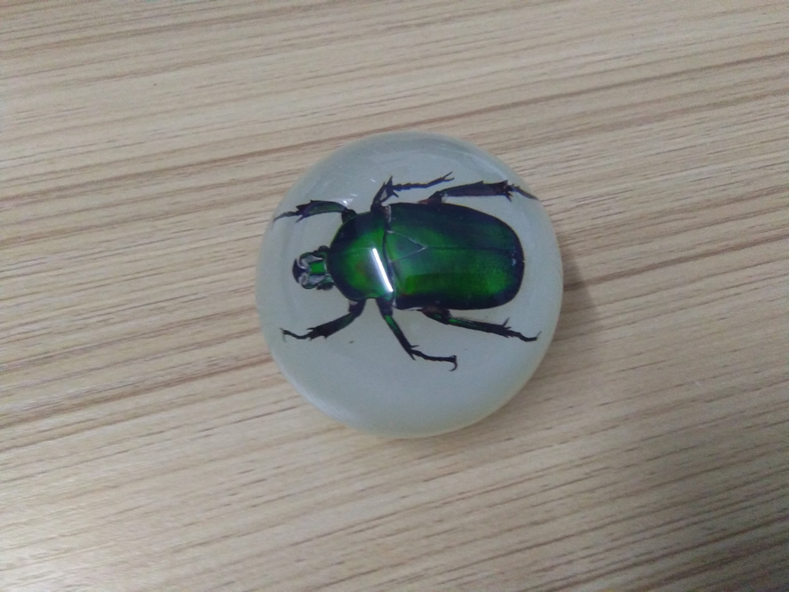 2018 SPECAIL popular acrylic gear shift knob REAL INSECTS INSIDE