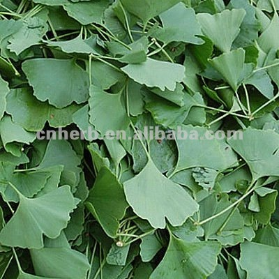 Dried Ginkgo Leaf with low pesticide residue
