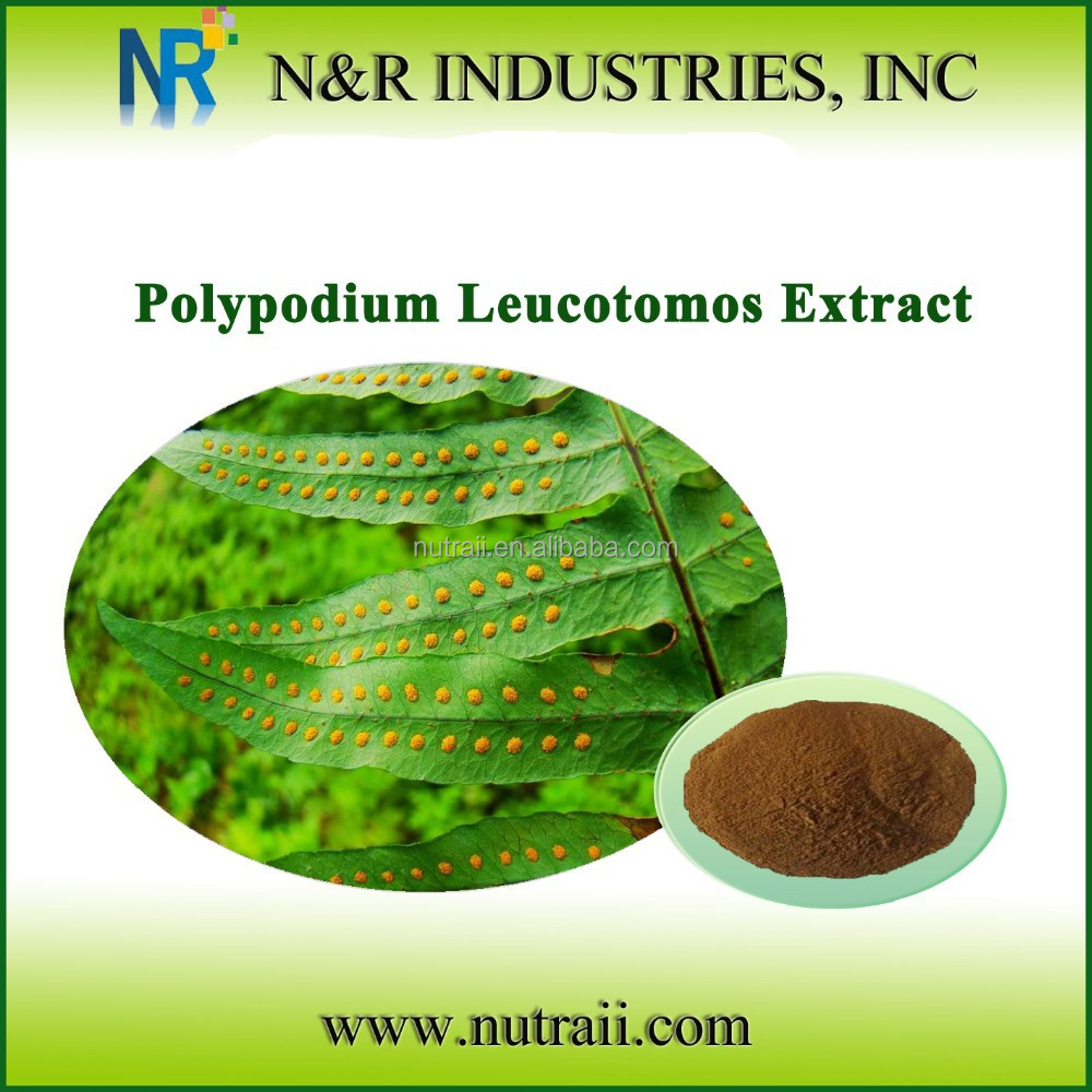 High quality Natural Polypodium leucotomos extract 10% triterpene