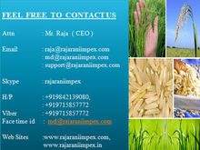 Indian Basmati Rice Prices
