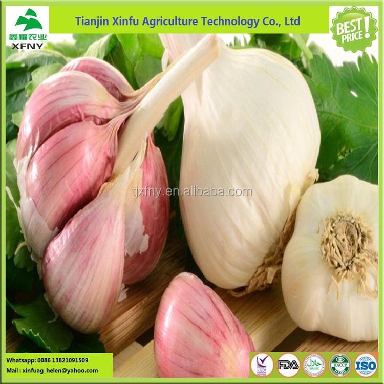 Manufacture price raw material purple red fresh garlic