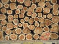 Sell Round Logs Teak Wood In Containers