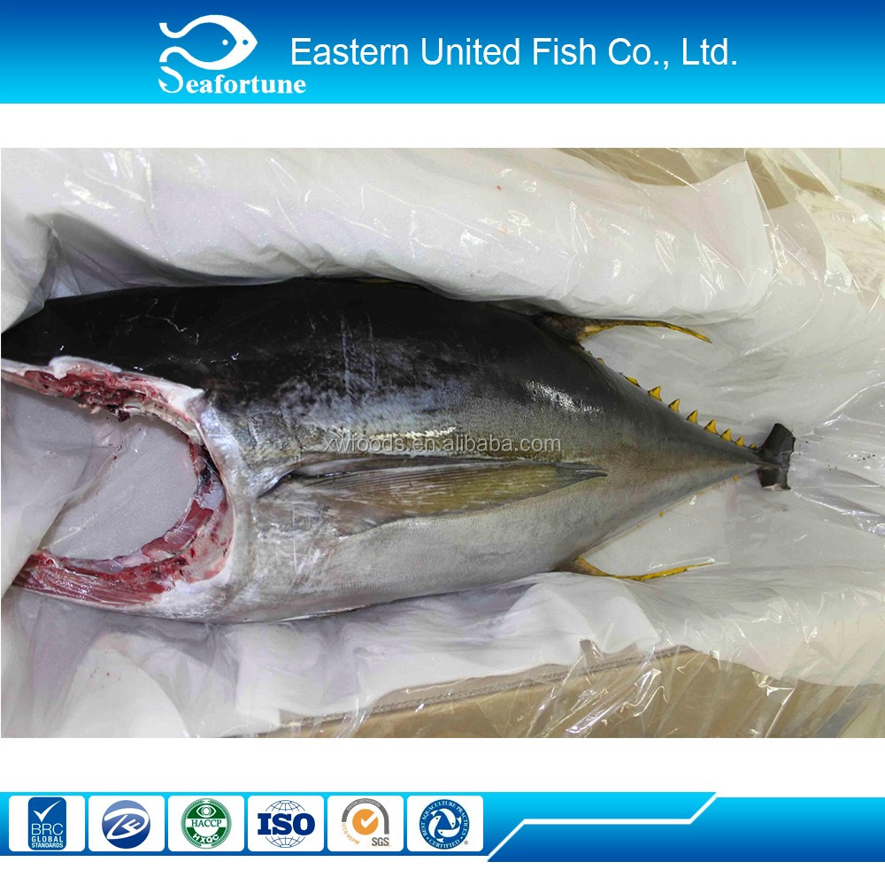 Iqf Frozen Tuna In Vegetable Oil
