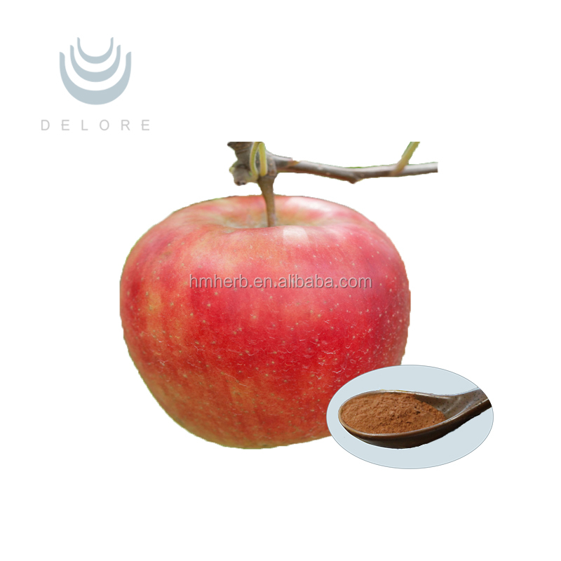 supply herbal extract apple extract 100% natural