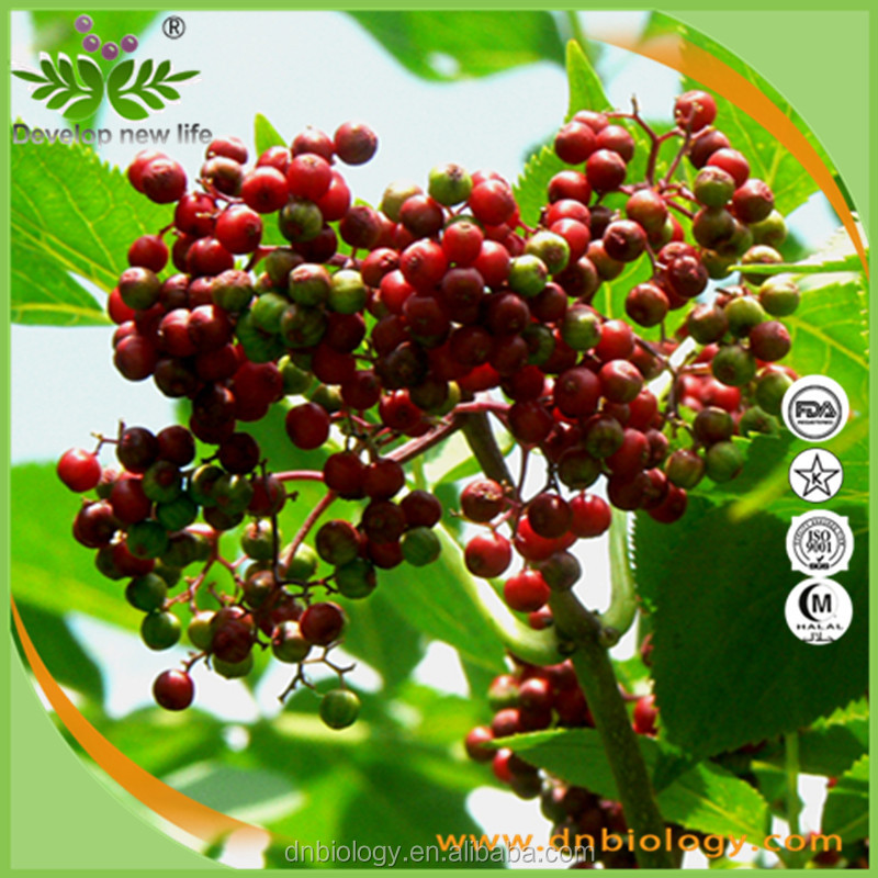 natural red Elderberry fuit Extract powder10:1 /Sambucus Nigra L. Extract Pharmaceutical Antioxidant Product