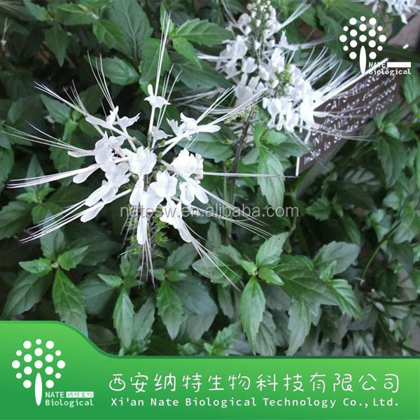 Low price Clerodendranthus spicatus powder - Clerodendranthus spicatus extract