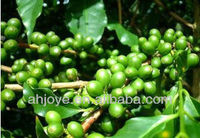 Green coffee Bean Extract Chlorogenic acid10%,20%,25%, 30%, 35%,45%, 50% HPLC