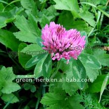 (Hot sales) Red Clover Extract Powder