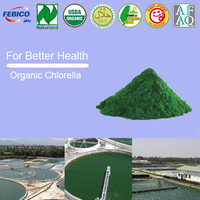 Chlorella Algae Certified Organic Spirulina Chlorella Green Algae Powder In Bulk