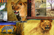 UV proof canvas posters of wild animals prints