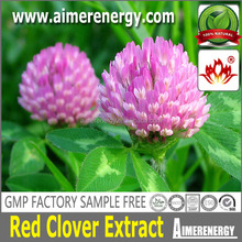 Hot Sell isoflavone red clover extract