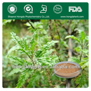 Factory Price Stinging Nettle Extract,Silicone 2%
