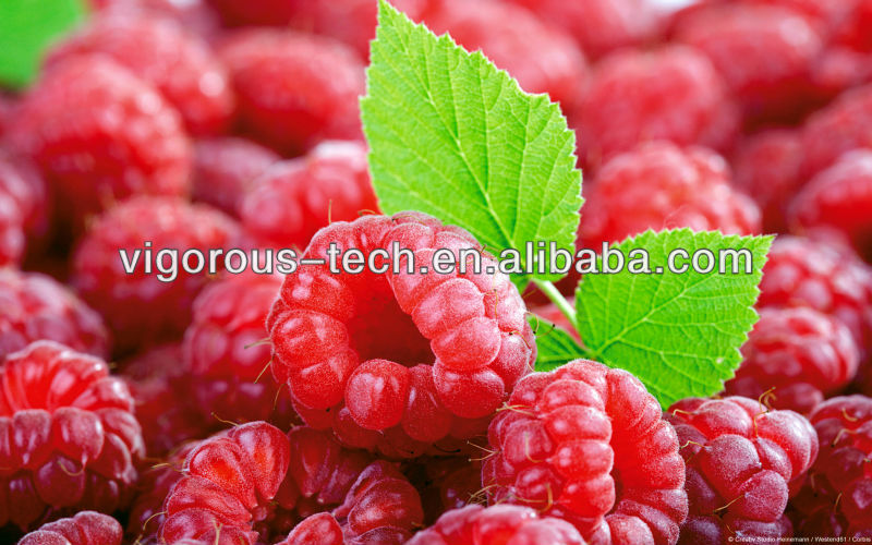 High quality raspberry extract/black raspberry powder/raspberry powder