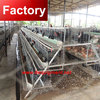 Best seling automatic chicken cage system for wholesales