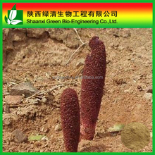 Kidney Tonic Songaria Cynomorium Herb Extract/ Songaria Cynomorium Herb Extract/women and men sex