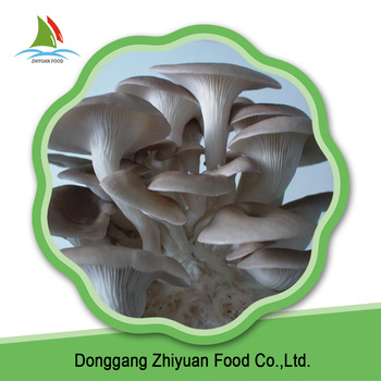 High quality best selling fresh raw material frozen oyster mushroom