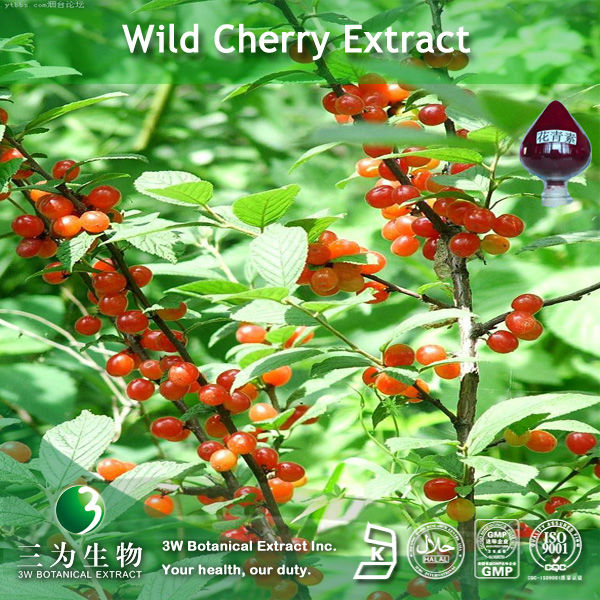 Black cherry extract (25%anthocyanin ) in fine powder