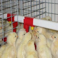 chicken automatic poultry bird nipple drinker for birds layer