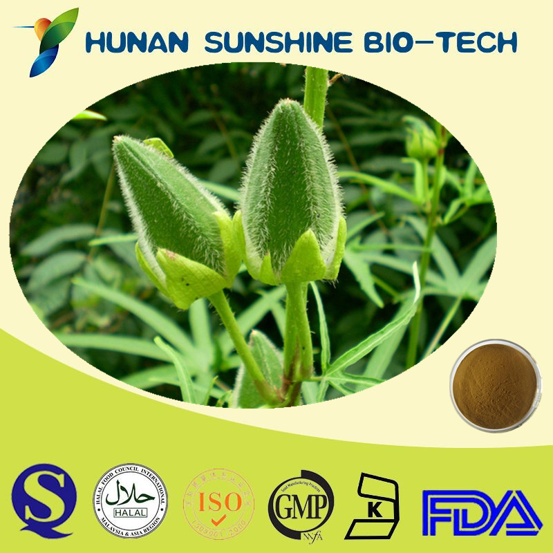 Health Natural Product Herbal Medicine Organic Okra Extract Powder 10:1
