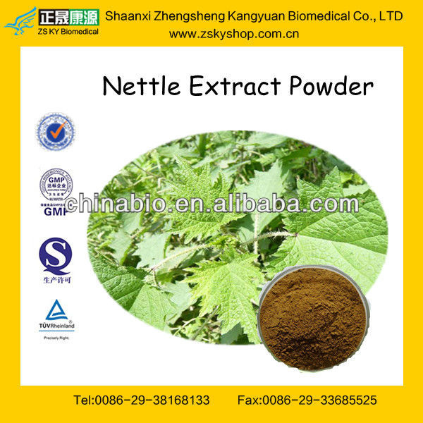 GMP Manufacturer Supply Stinging Nettle Extract