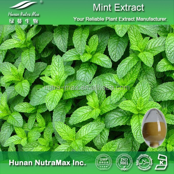 Wild Mint Extract/Mint Leaf Powder/Mint P.E.