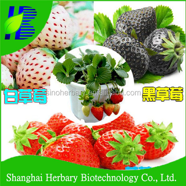 2017 White Strawberry seeds for sowing with good taste