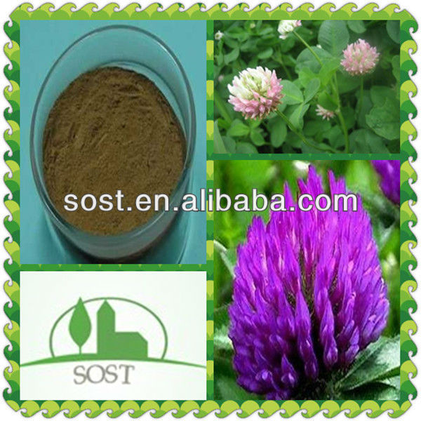 2013 Best Selling And Organic Red Clover Extract Isoflavons