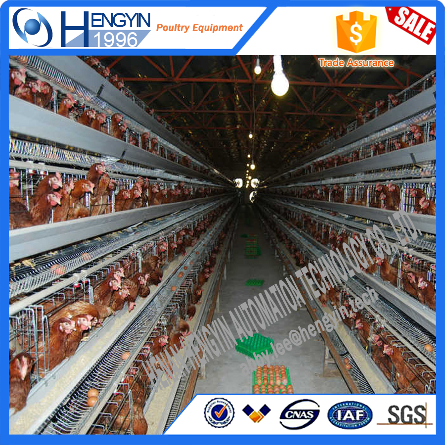 20 Years supplier cheap automatic poultry chicken egg laying cage coops for sale