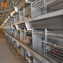 H Type Multi-Tier Pullet Chicken Rearing Cage