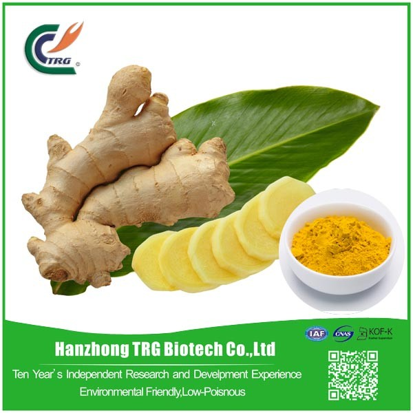 Hot selling Ginger Root Extract with great price