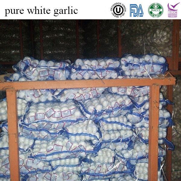 wholesale whole garlic price for high quality
