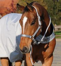 Deluxe Nylon Webbing Horse Halter with hardware
