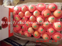 2015 fresh fruit import red fuji apple from china/cheap apple fruit