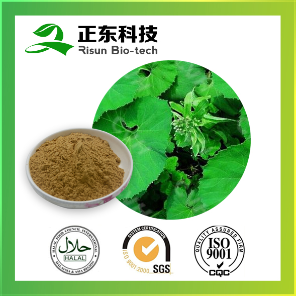 Organic raw material 10:1 extract powder TLC Butterbur Extract