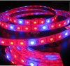 2015 shenzhen Flexible Waterproof Led Strip 5m 5050 Led Strip Light with factory price.