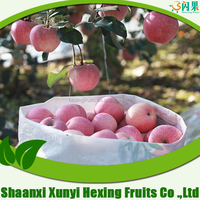 fresh fuji apple/china apple names of red fruits/best price fuji apple