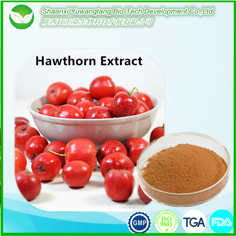 100% natural product Maslinic acid extract powder, Hawthorn Berry P.E.