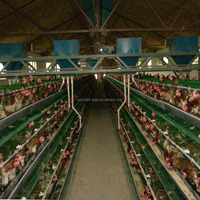 chicken cages layer poultry farm house