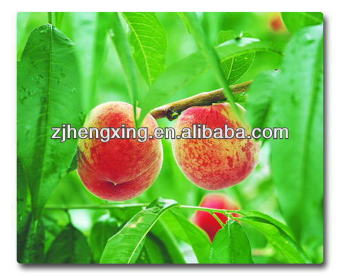 hot selling peach printed pp plastic placemat