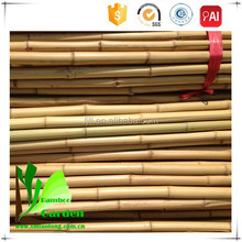 Moso Type Treated Bamboo Poles
